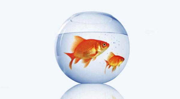 the-fish-tank_470x260-470x260.jpg