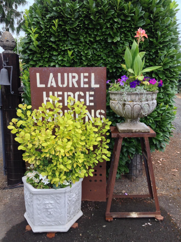 Laurel Hedge sign