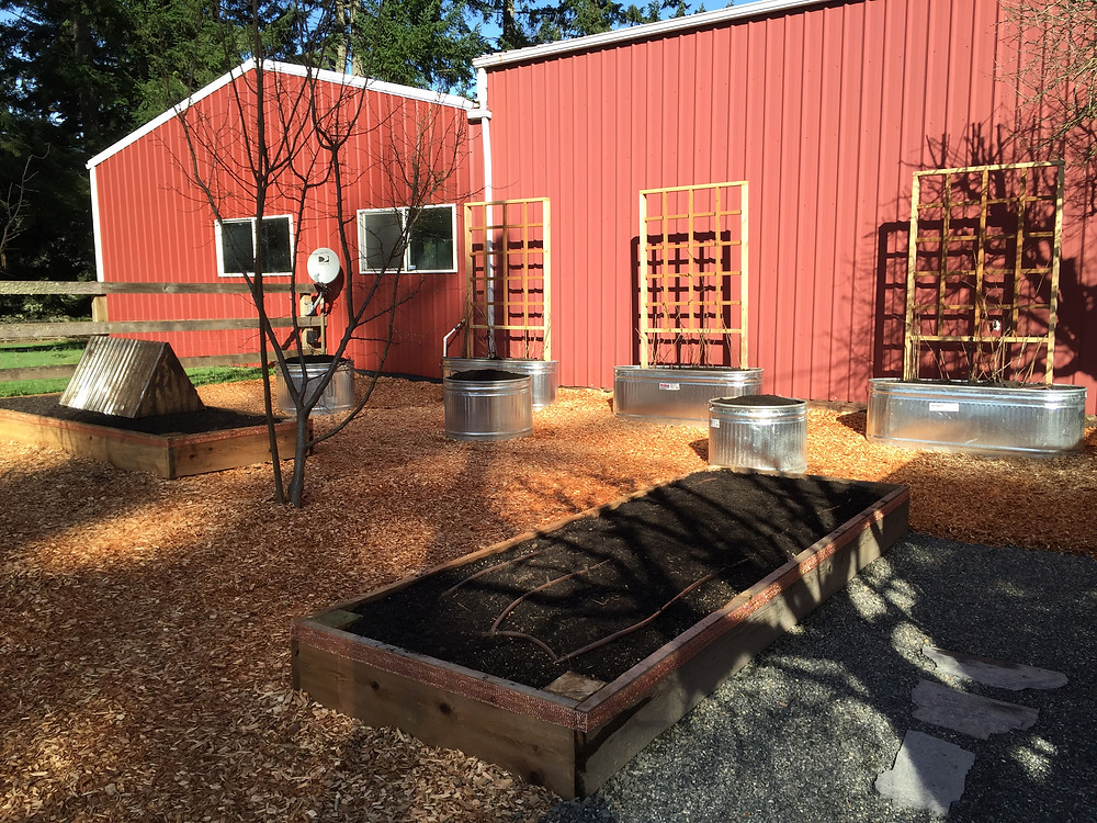 Cedar raised planting beds