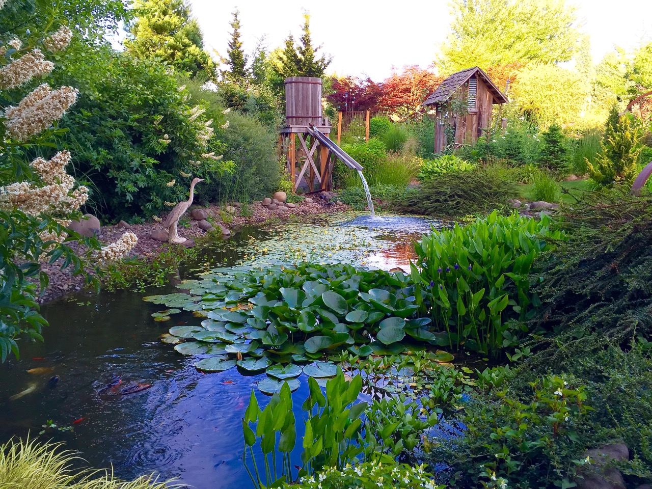 The Pond at Laurel Hedge