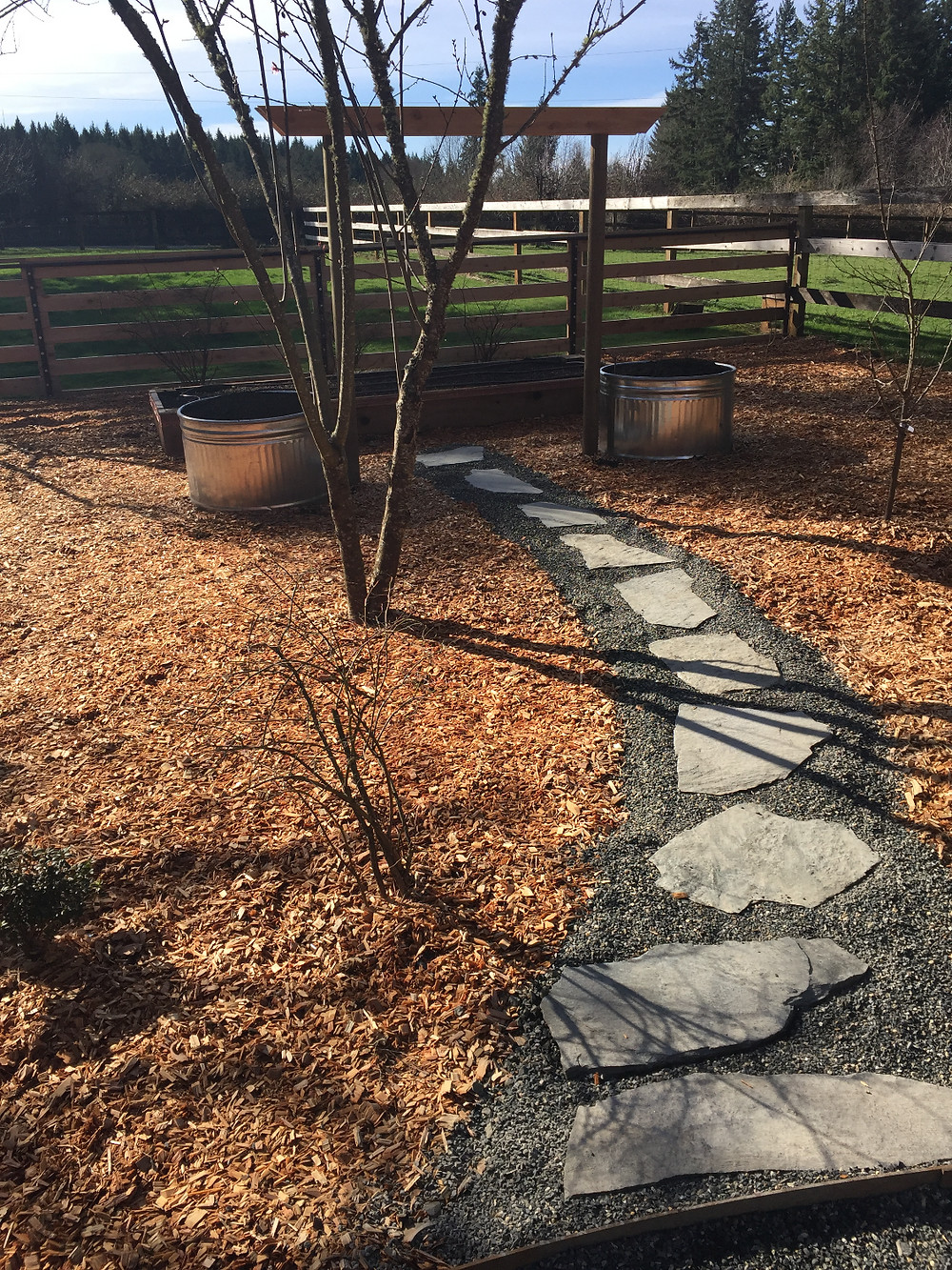 Walk to Grape Arbor and cedar raised bed.
