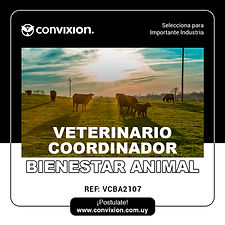 veterinario-coordinador-bienestar-animal.jpg