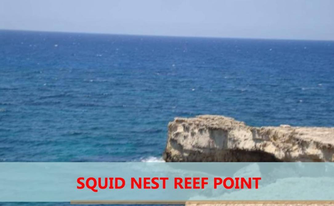 8. Squids Nest reef point