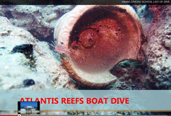 6. Atlantis Reef