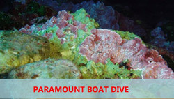 18. Artificial Reef