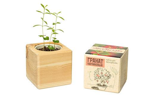 Набор для выращивания Экокуб: гранат, лаванда