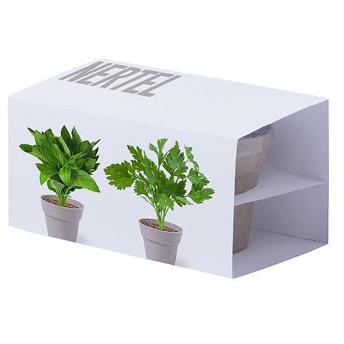 Набор: два горшочка для выращивания петрушки и мяты с семенами