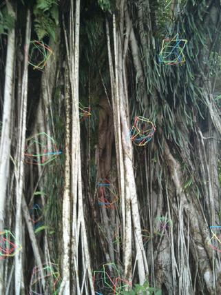 Spider Bursts, Fort Canning, Singapore