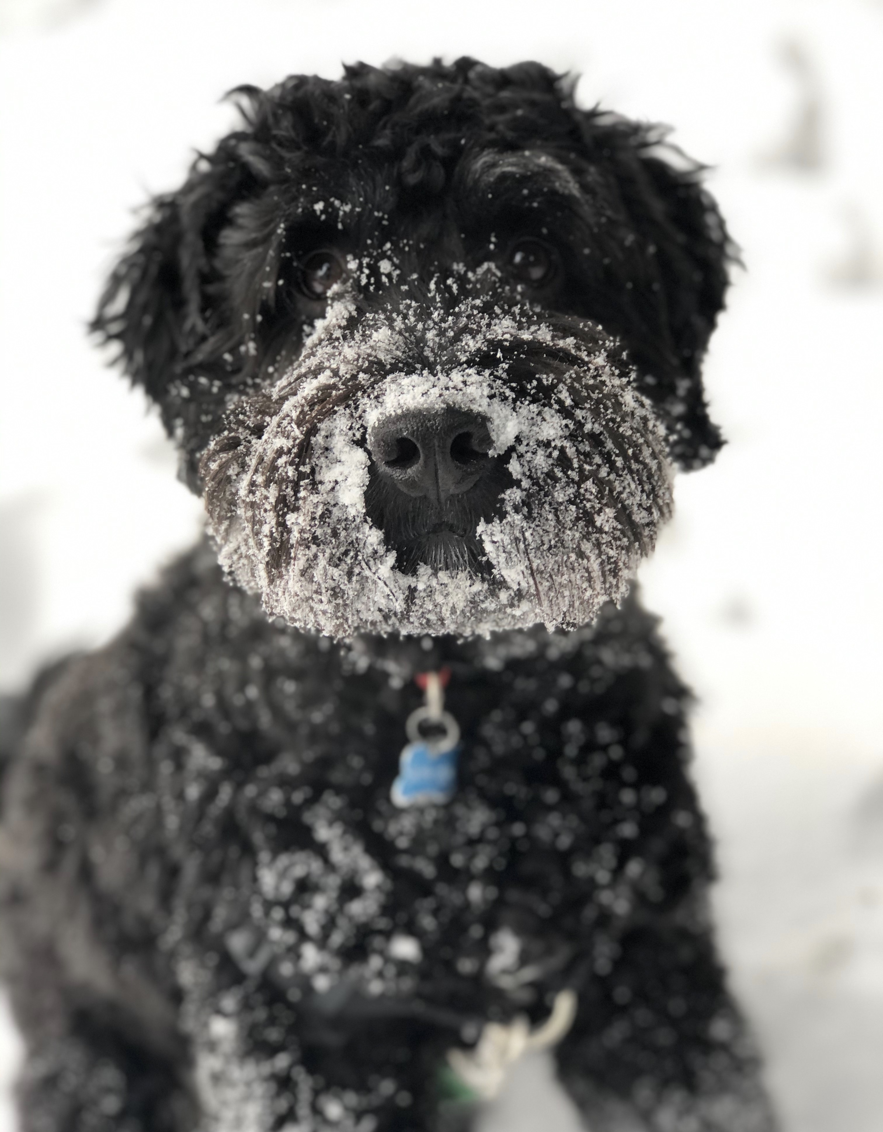 Snow Day Duncan