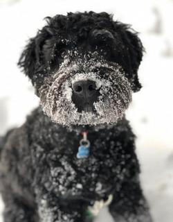 Snow Day Duncan