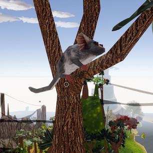 Grey Mouse Lemur