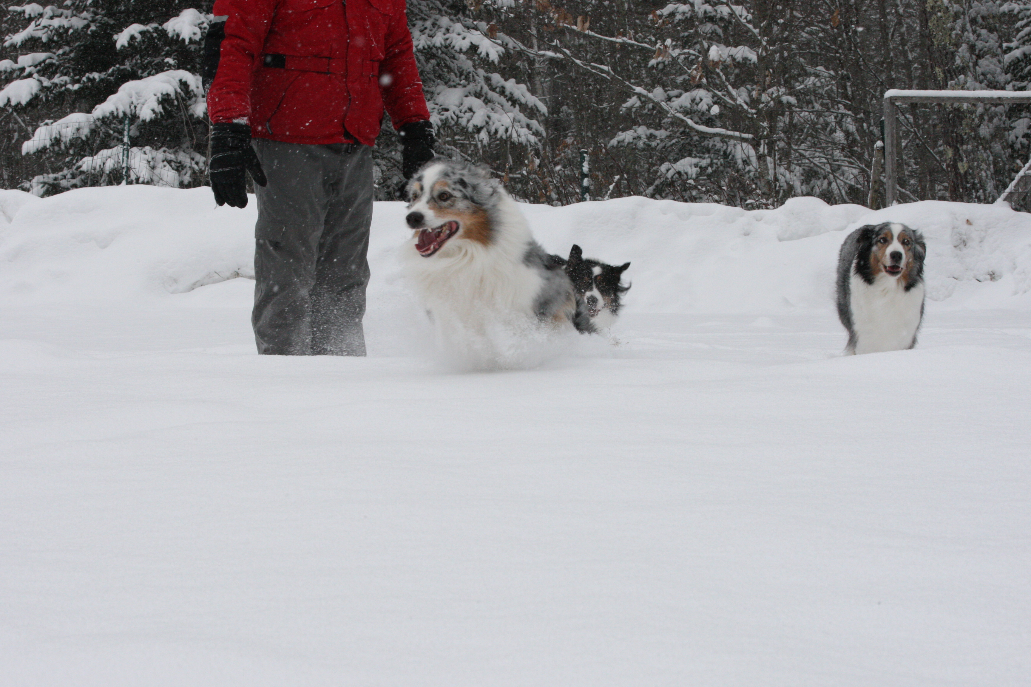 Dogs Feb 11, 2017 (7)