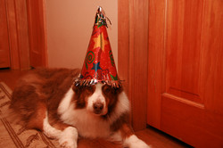 Happy Birthday!!! Rojo 14 years old