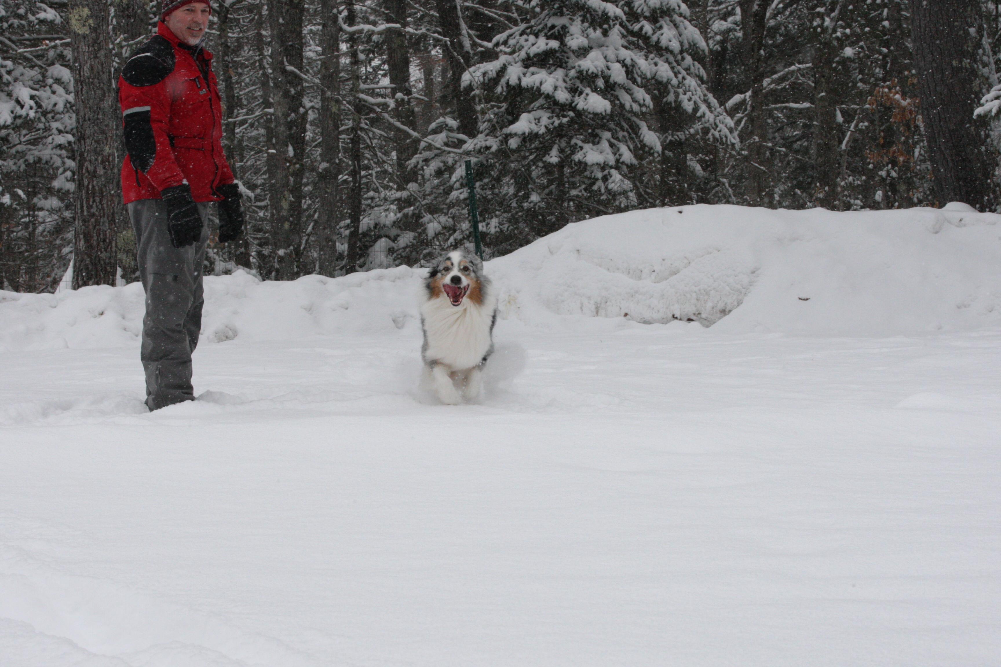 Dogs Feb 11, 2017 (11)