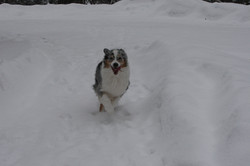 Dogs Feb 11, 2017 (3)