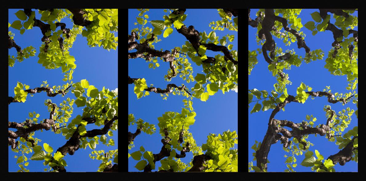 2008_Assisi_Blue_70x150cmWeb