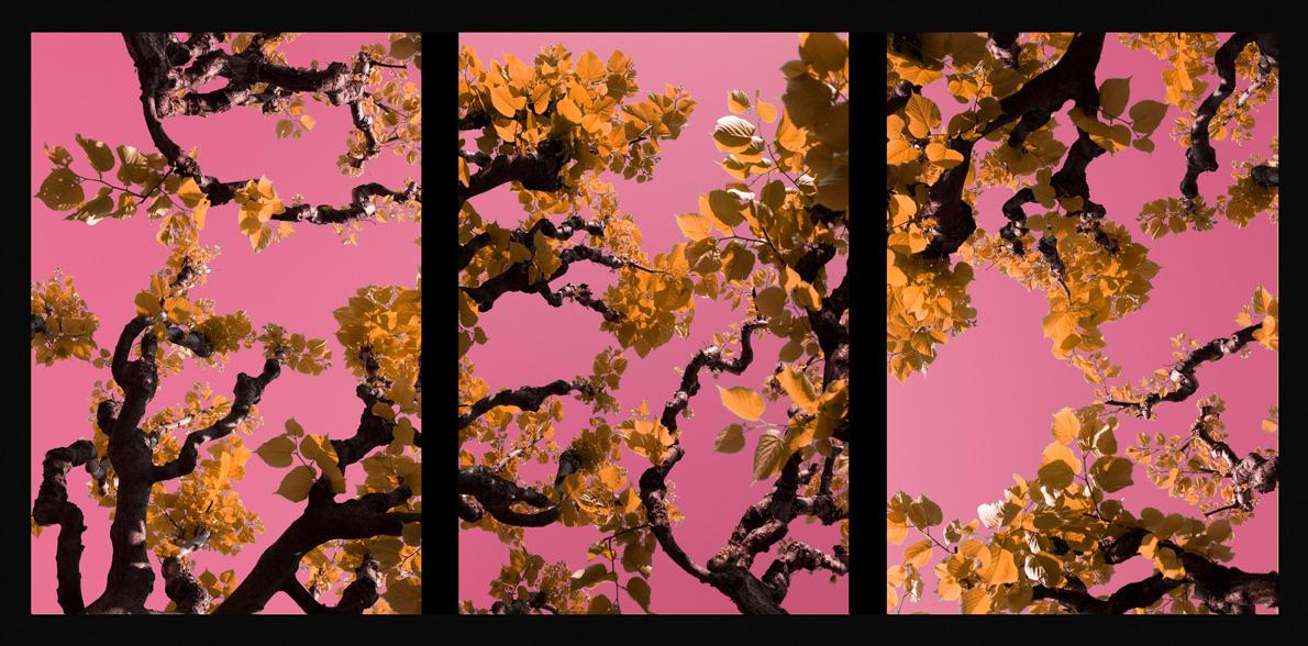 2008_Assisi_Pink_70x150cmWeb