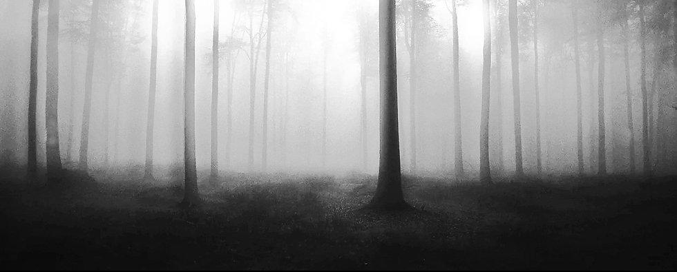 3.dark_forest2_grey_soft.jpg