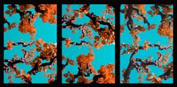 2008_Assisi_Turquoise_70x150cmWeb