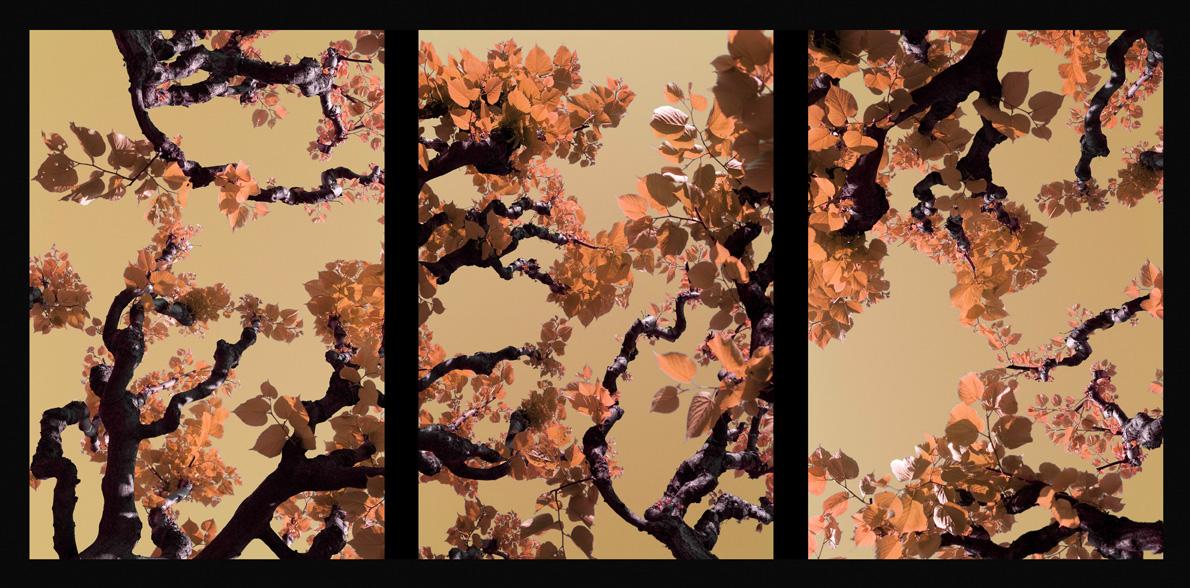 2008_Assisi_Orange_70x150cmWeb
