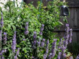 lavendar-background.jpg