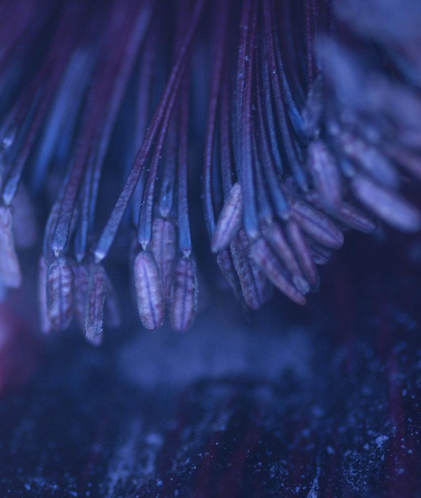 Blue Flower tips.jpg