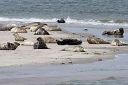 zeehonden.jpg
