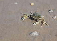 crab-1847507_1920.jpg