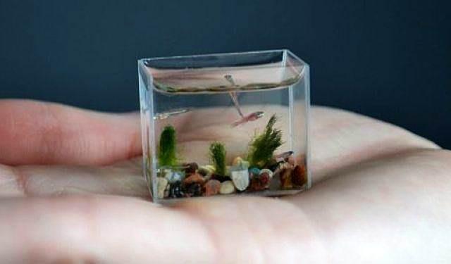 O QUE É ESTRATÉGIA DE VIDA  do aquário a sopa de peixe