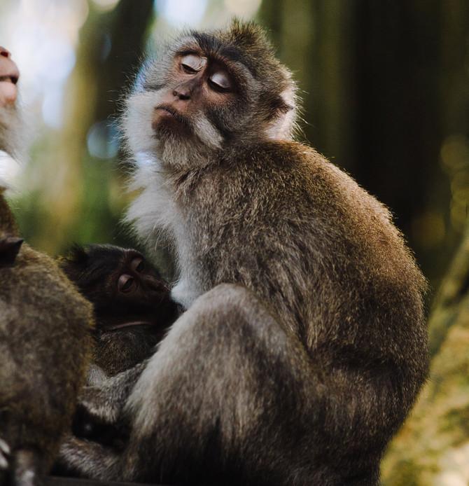 """E você pode ser o """"Centésimo Macaco"""""""