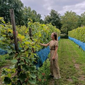 3 x wijnen in Nederland!