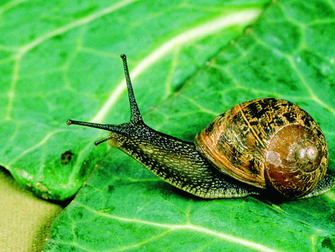Patience at a Snails Pace