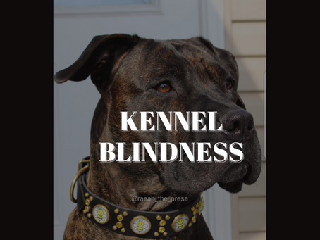 What Is Kennel Blindness?