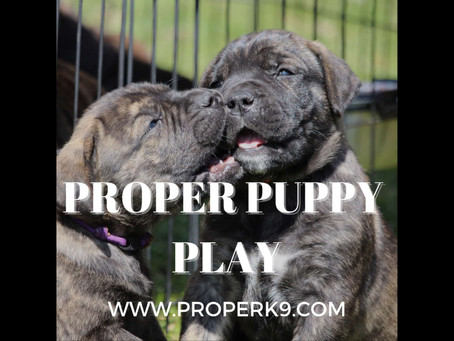 Proper Puppy Play & Interaction