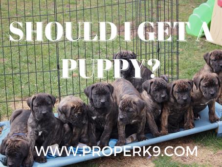 Should I Get A Puppy?
