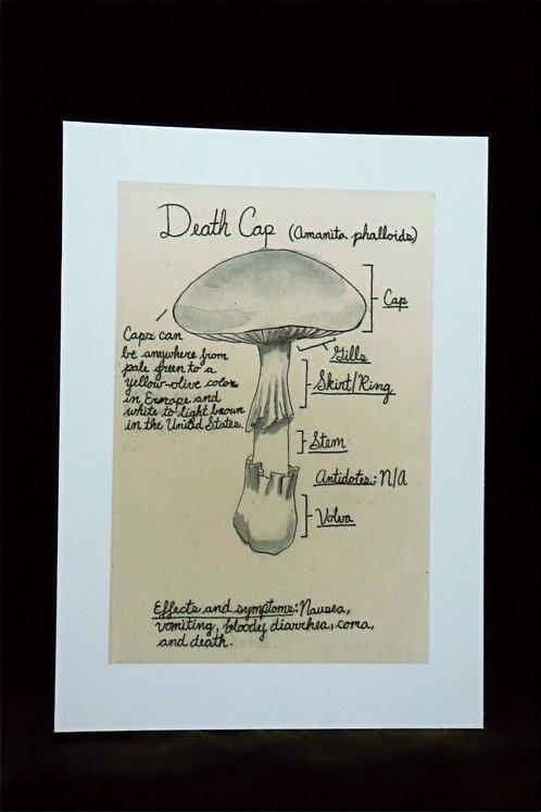 Death Cap Study (print)
