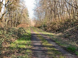 The Woodland Trail