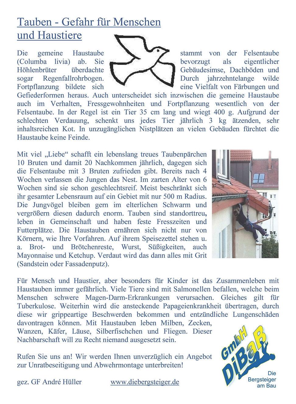 Dachsteiger Dresden I Taubenabwehr I DiBaB
