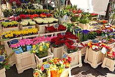 flowers-1524612.jpg