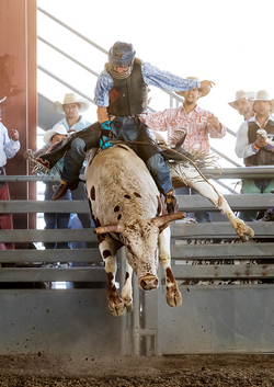 Norco Horseweek, Extreme Bull riding