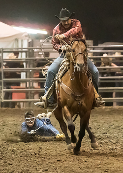 Norco Horseweek, Extreme Ranch Rodeo