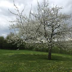 Spring in the Perigord