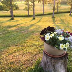 Our garden as the sun sets.