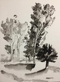 aquarelle arbres