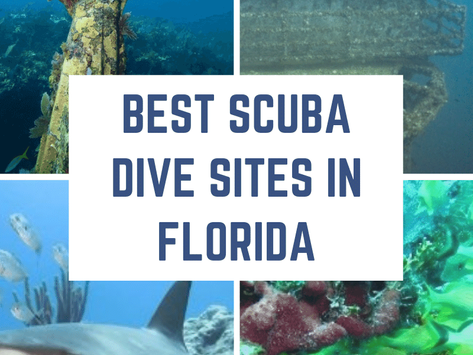 Best Scuba Dive Sites in Florida