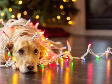 Jul med din glede (vrede)