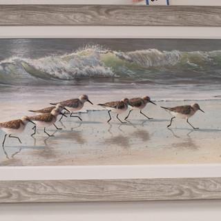 Sandpiper Print