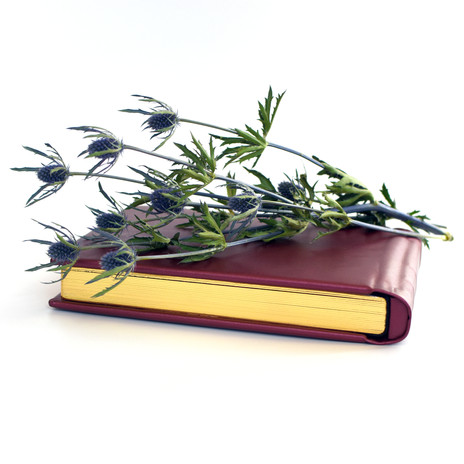 album with spikey plant.jpg