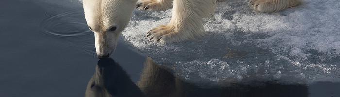 polarbear_environjpg