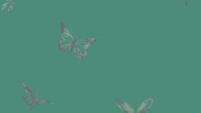 Butterflies 510004
